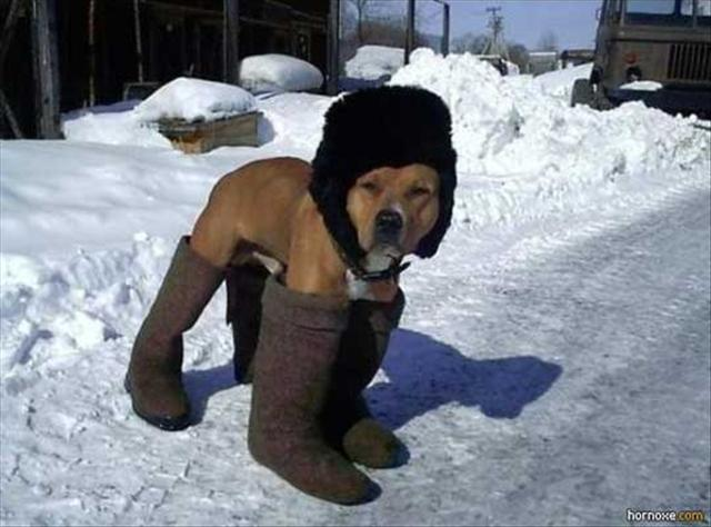 a-dog-wearing-boots-in-the-snow