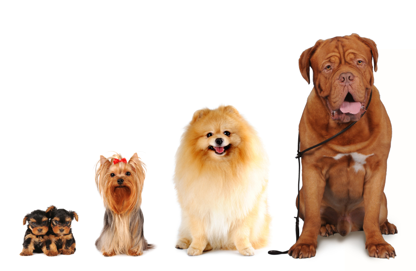 Group Of Dogs Diffe Sizes Isolated