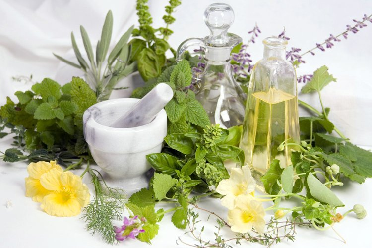 Introduction to Animal Herbalism