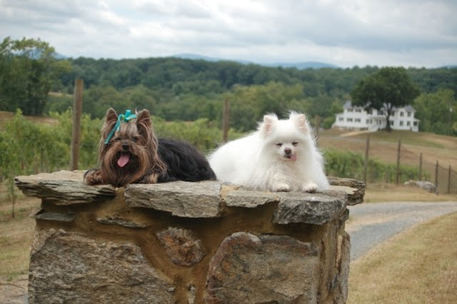 Wine Dogs on Entry Post