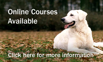 Online Canine Courses Available