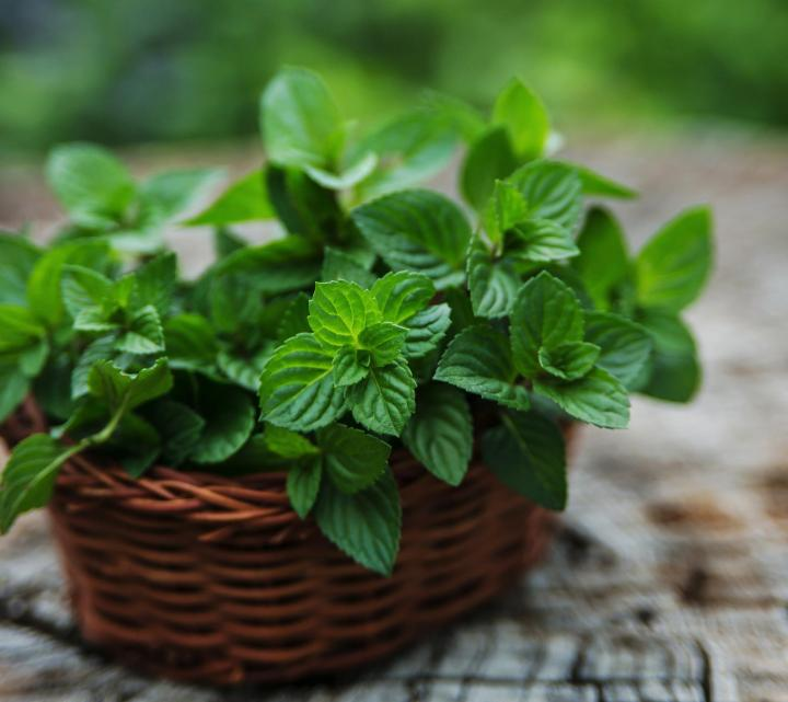 """Five Top Reasons that """"Herbs Don't Work"""""""