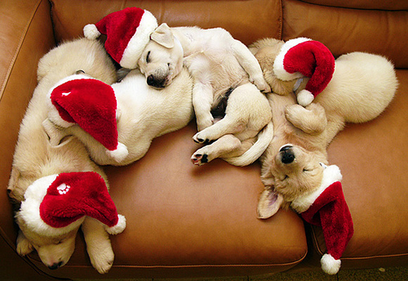 cute-christmas-animals-28