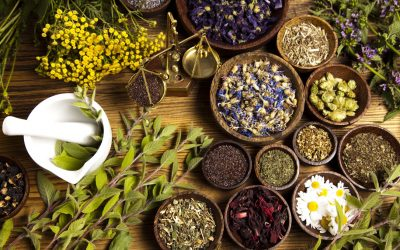 Fall Course – Introduction to Herbalism for Cats and Dogs